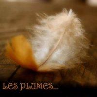 Les plumes 43 d'Asphodèle